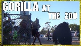 gorilla banana prank