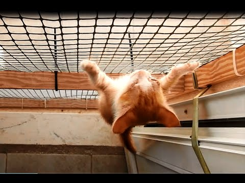 Blind kittens - You won't believe what they can do!