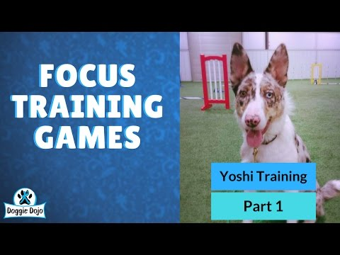 Dog Training Snapshot - Yoshi Training Session: Part 1