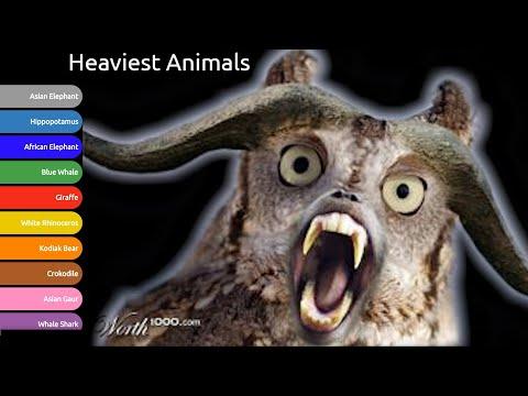 Animal World Records