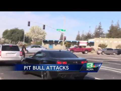 Pit bulls attack men, cat in Stockton