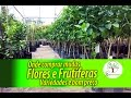 Mudas de Flores e Frutíferas onde comprar variedades e bom preço para sua casa, estilo de vida