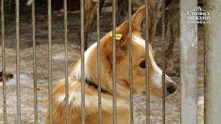 Контактные зоопарки и котокафе в России будут запрещены по закону о защите животных