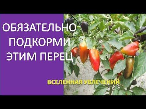 ПОСЛЕ ТАКОЙ ПОДКОРМКИ ПЕРЕЦ УСЫПАН ПЛОДАМИ. СУПЕР УДОБРЕНИЕ ДЛЯ БОЛГАРСКОГО ПЕРЦА . | болгарский | удобрение | древесная | сладкий | зеленое | огород | зленое | перца | перец | супе