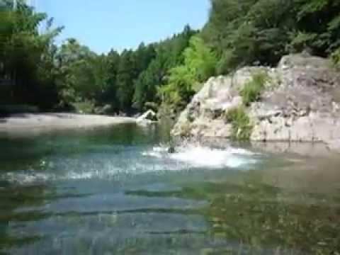 Bernese Mountain Dog & Great Pyrenees Swimming in river 2013-07-07-2