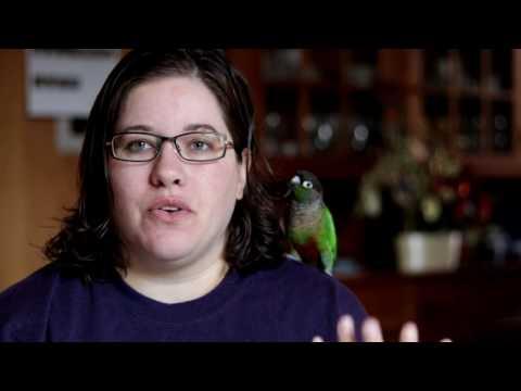 So You Wanna Buy A Bird | Meet Leto a Green Cheek Conure