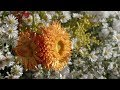 VAN GOGH AND THE SEASONS – The exhibition film