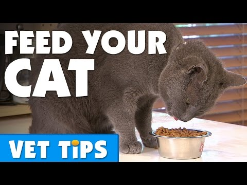 What should I feed my cat and how much? | Bondi Vet