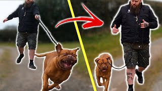 How To Stop Your Dog PULLING On The Leash  EXTREME CASE
