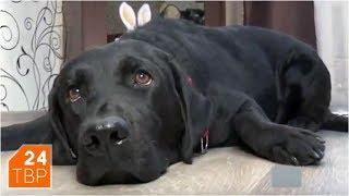 Собака-поводырь Натальи Мацневой знает много дорог | Элита | ТВР24 | Хотьково