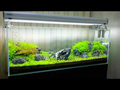 Aqua Forest Aquarium - 水族之森 水草造景工作室 (6).mp4