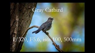 Wildlife Photography - Episode 1