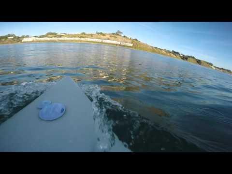 Great White Shark Encounter Surfing in Santa Cruz, CA
