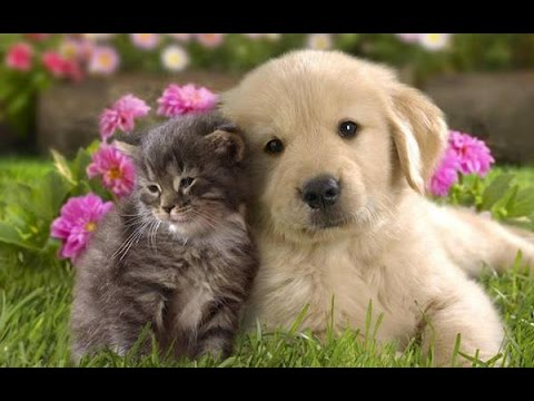 Cute Animals Are Friends - Animal Friendships Compilation 2015 [NEW HD VIDEO]