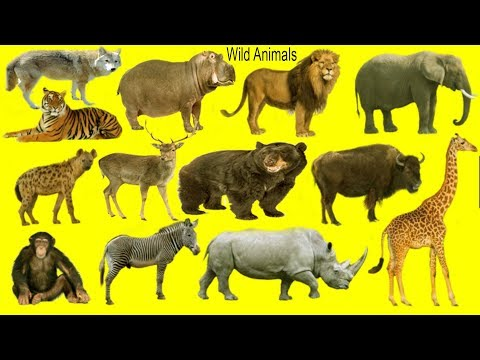 Wild Animals Name, Meaning & Picture | Wild Animals Vocabulary