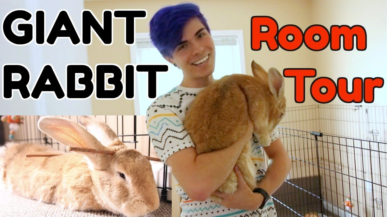 rabbit-room-tour-for-a-giant-rabbit