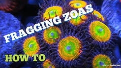 Fragging Zoas (HOW TO)