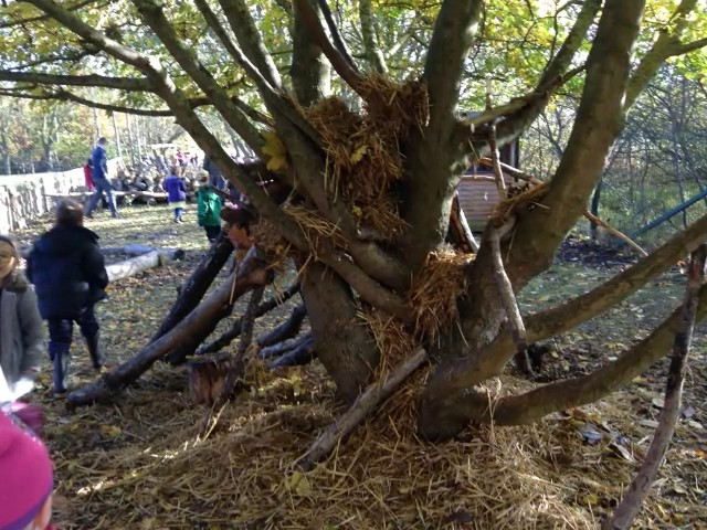Year One  Den Building
