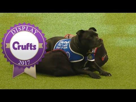 East Anglian Staffordshire Bull Terrier Display Team | Crufts 2017
