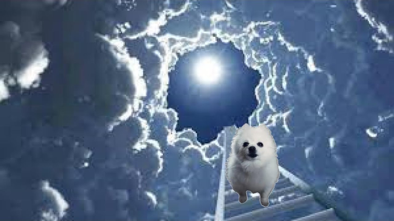 Download R.I.P GABE THE DOG TRIBUTE