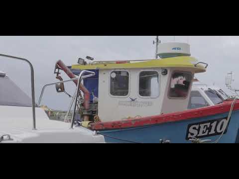 Wild Harbour - Introduction