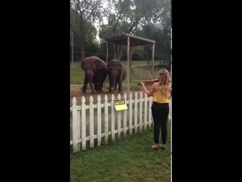 Elephants Dancing to Violin!  Adorable!