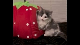 Cutest Kittens  1 Hour of Funny Feral Kittens Playing During the Taming Process  Compilation
