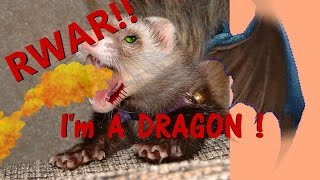 FERRETS, need lots attention, WHEN NOT SLEEPING!