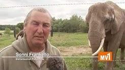 Elefantenhof Platschow lädt ein
