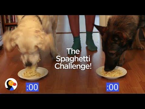 Dog Spaghetti Eating Contest | The Dodo