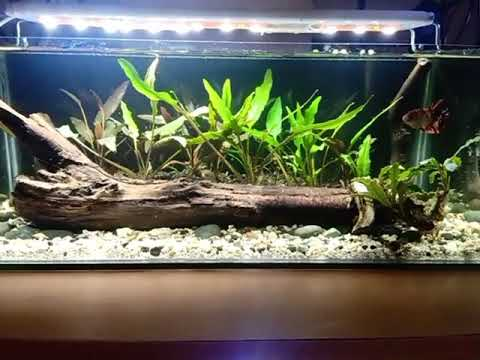 Inspiration For Betta Tank Simple Low Tech Aquascape Decoration Part 1 Youtube