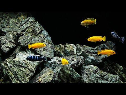 BEST Malawi Cichlid Aquascape (+ 6500G Planted Tank News!)
