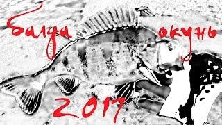 Окунь на балду. 2017 Куршский залив.
