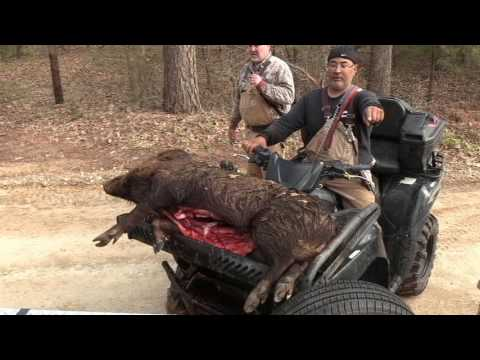 TEXAS HOG DOG HUNTING WITH WILD TEXAS OUTFITTERS