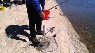 Video A big trout at Aurora Reservoir download MP3, 3GP, MP4, WEBM, AVI, FLV November 2017
