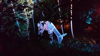 """Останкинский парк - Волшебный лес, световое шоу, фестиваль """"вдохновение"""""""