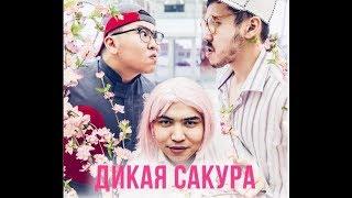 Дикая Сакура (3 эпизод)