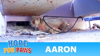 Homeless sick dog living under cars for 7 months - finally saved!  Please share.