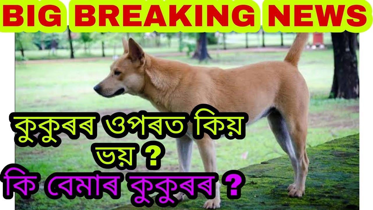 কুকুৰৰ ওপৰত কিয় ভয় ?|| What dease causes in dog ||