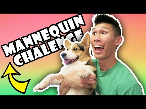 CORGI DOG NAILS MANNEQUIN CHALLENGE || Life After College: Ep. 519