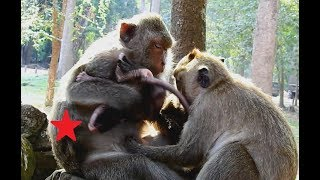 Video Very Hate, Dolly Try Catch Brutus Jr many time Baby and mom monkey Jill Very scare. download MP3, 3GP, MP4, WEBM, AVI, FLV April 2018