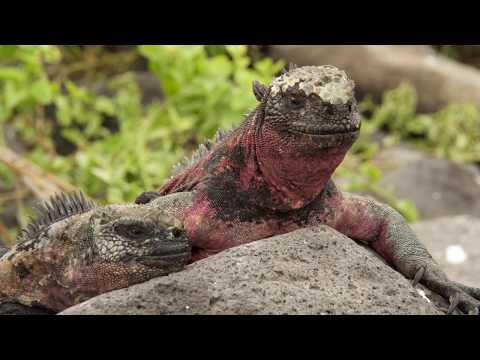 Galapagos Slideshow