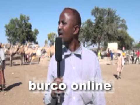 Burco online news com