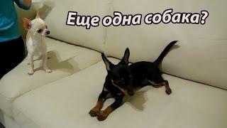 VLOG: С Климом готовим блины / МЫ дома /У нас гости / Еще одна собака