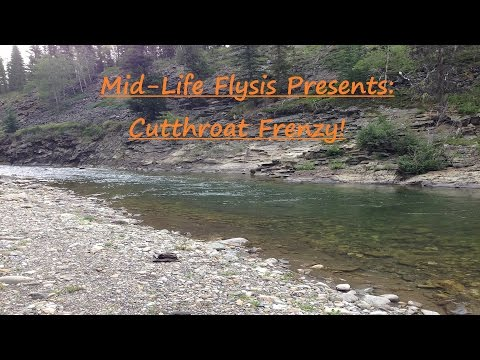 Fly Fishing Alberta | Cutthroat Frenzy