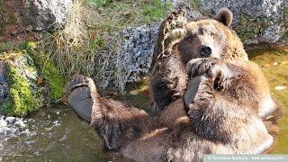 Австрия #159: Зоопарк в Зальцбурге (Salzburg Zoo)