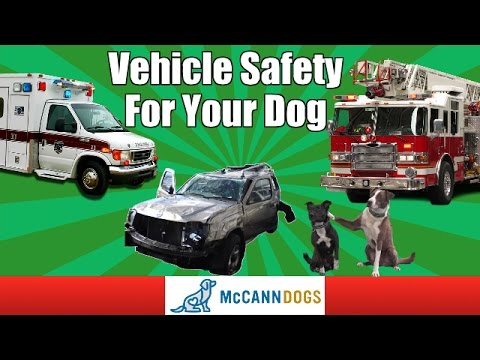 Travel Safety For Your Dog