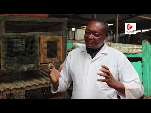 On The Farms Of Africa SN1 EP9 (Rabbit Farming)