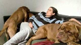 Repeat youtube video Maja und Elmo beim Couchkampf
