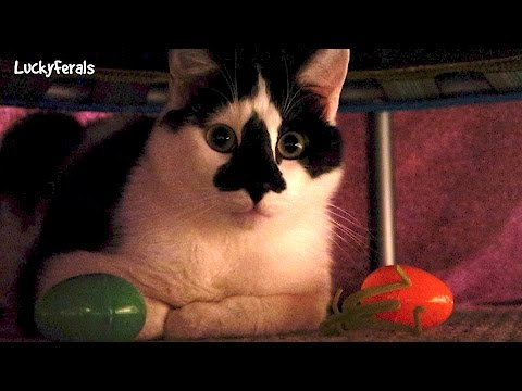 Cats Playing With Catnip Surprise Eggs